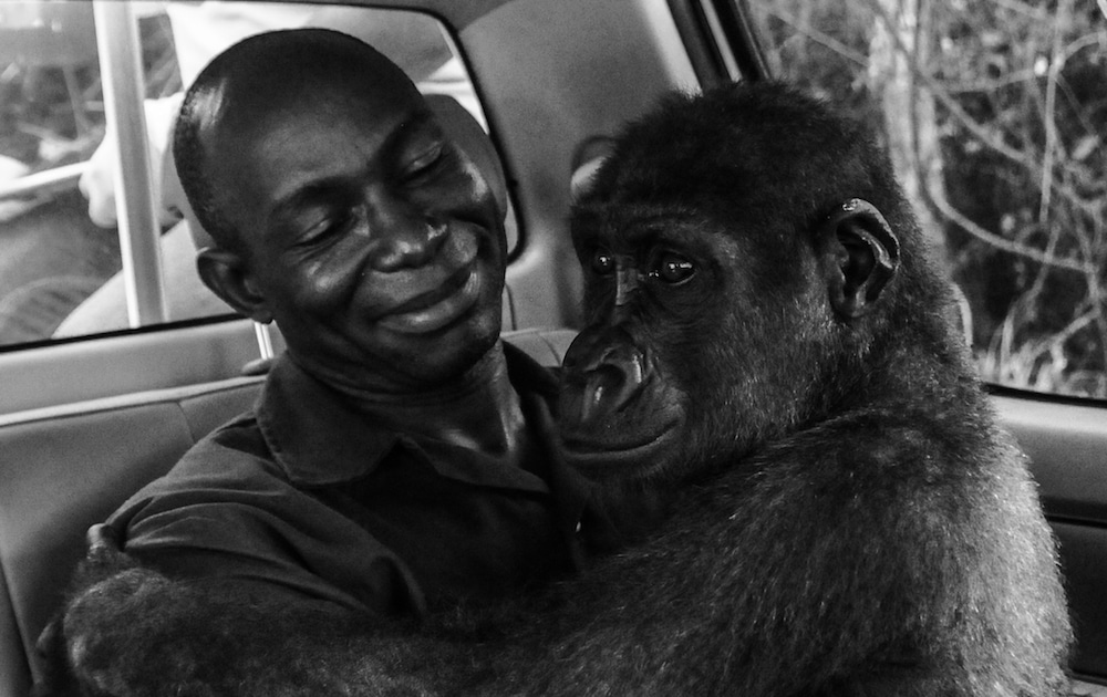 Pikin and Appolinaire Jo-Anne McArthur Wildlife Photographer of the Year