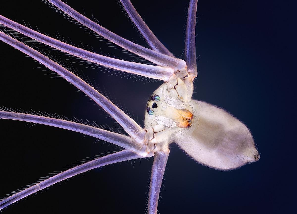 Insect Photographer John Hallmén