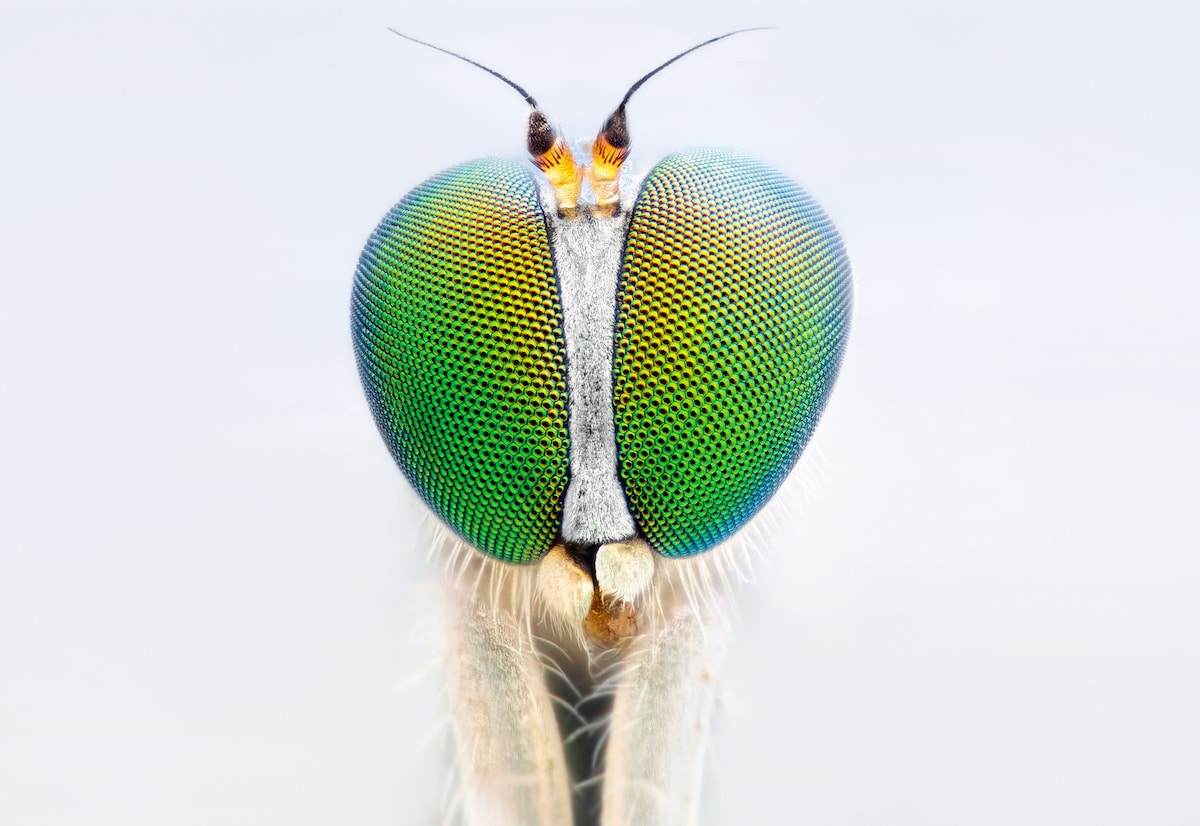 Insect Photography by John Hallmén