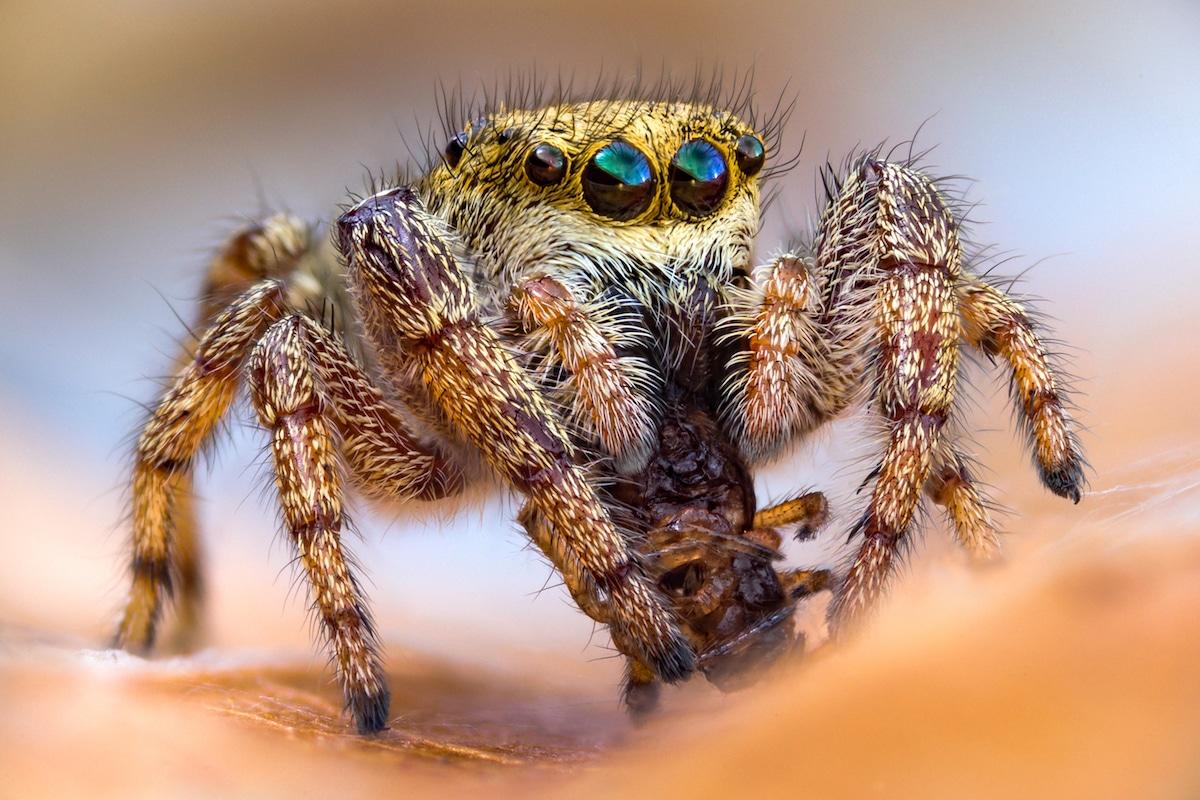 Insect Photography by John Hallmén