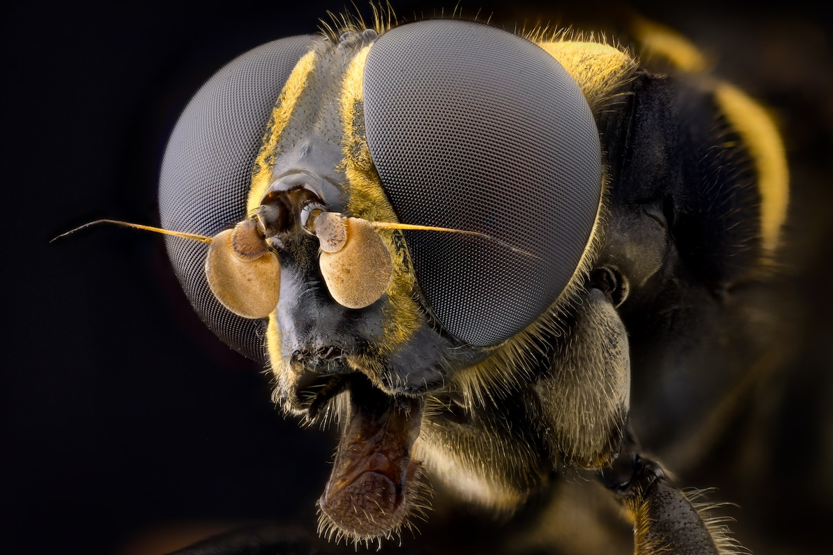 Insect Portraits by John Hallmén