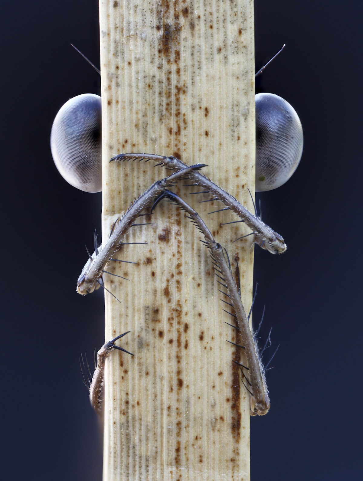 Insect Photograper John Hallmén