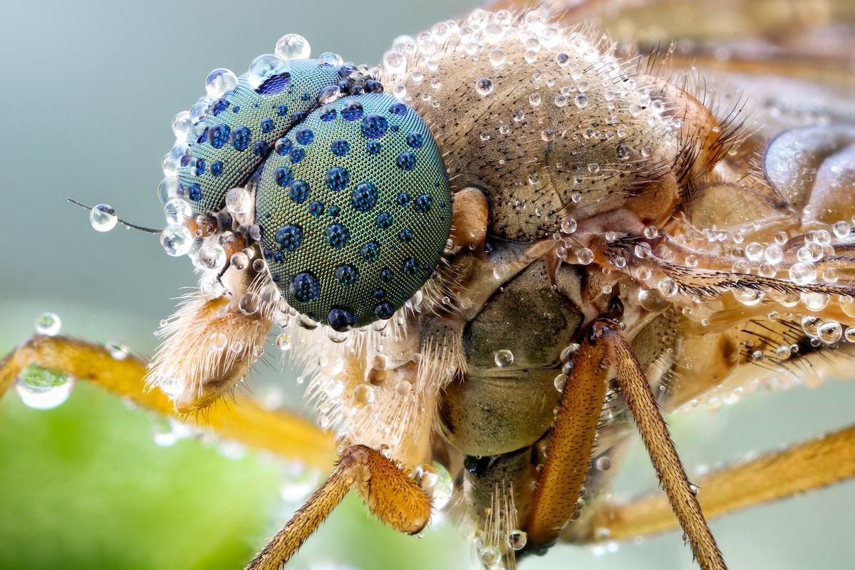 Insect Portraits by John Hallmén