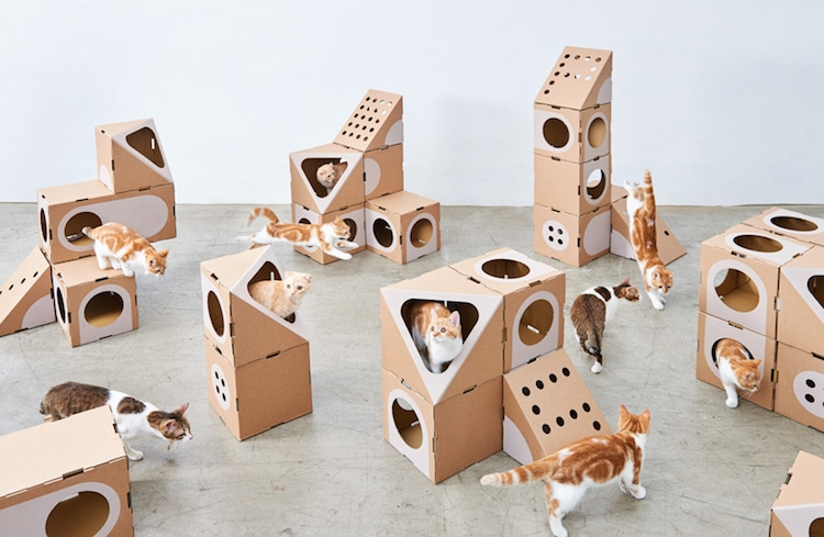 Modular Cardboard Cat Furniture Is An Ever Changing Playground