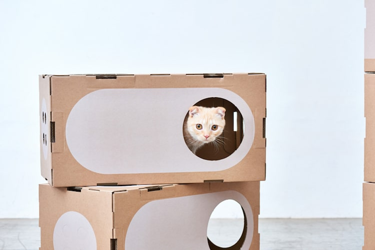 Modern Cat Cardboard Furniture