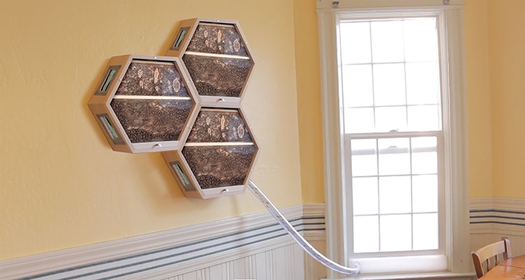 Modular Bee Hives Allow You to Observe and Learn About