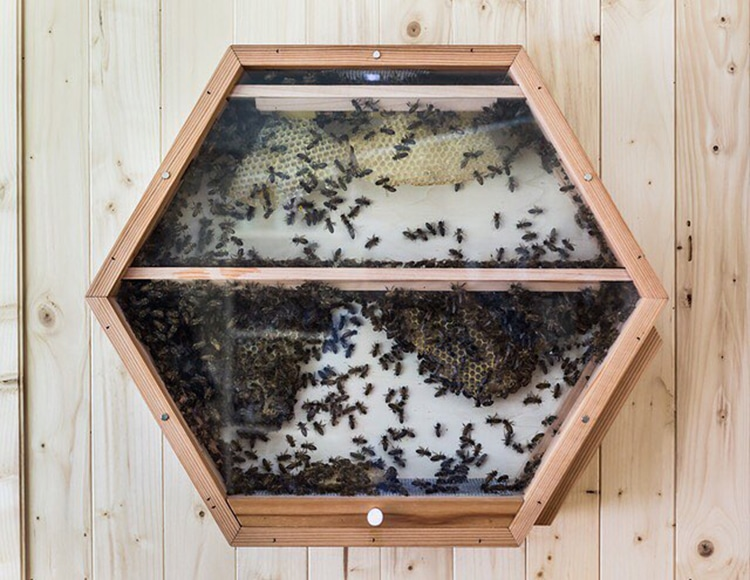 Designers Create Real Observation Beehive You Can Mount On Your Wall At Home