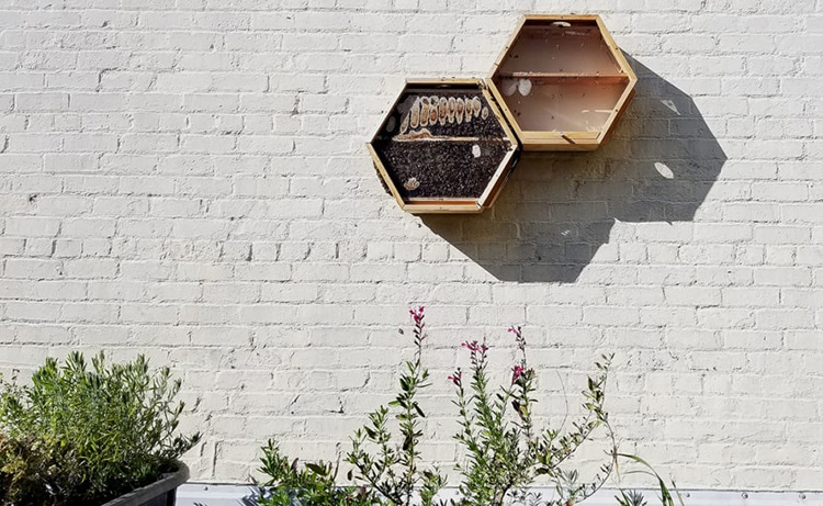 Modular Observation Bee Hives By Beecosystem