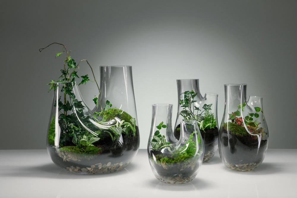 Plant Glass Terrarium by Tom Dixon