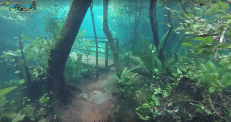 Crystal Clear Water Turns Brazilian Rainforest Into ...