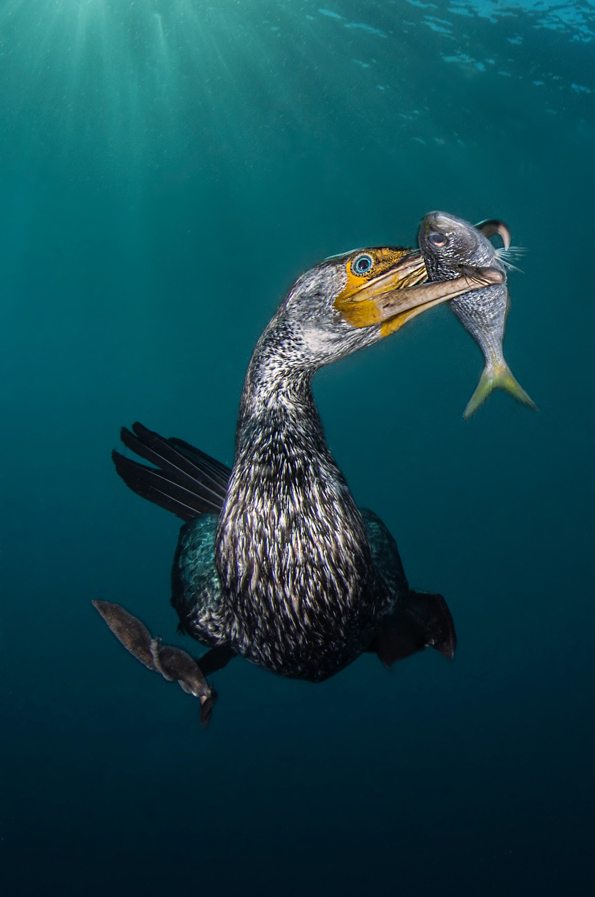 Underwater Photography Winners 2018