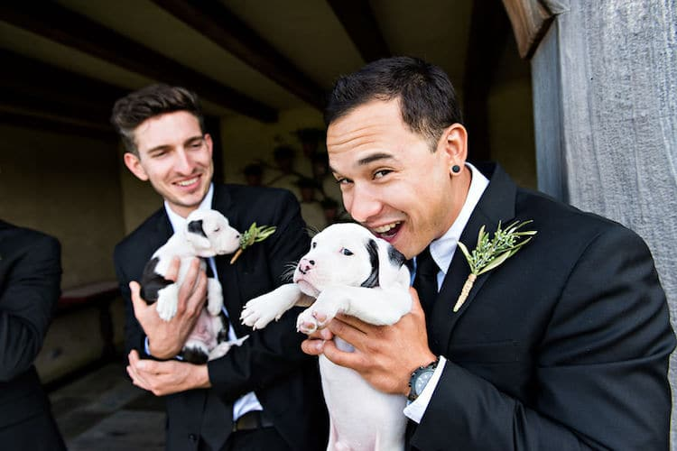 Puppies in Wedding