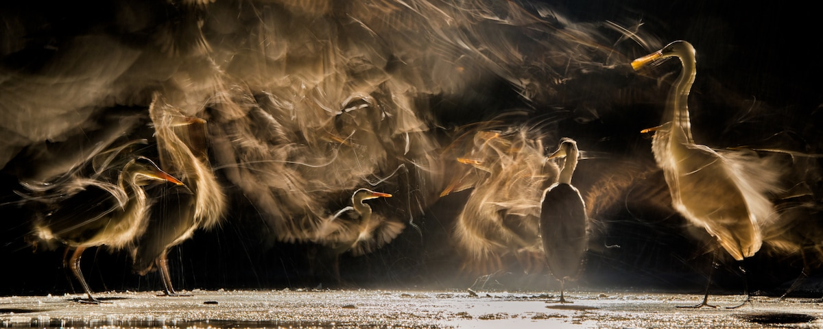Bird Photographer of the Year 2018 Bird Photography Contest
