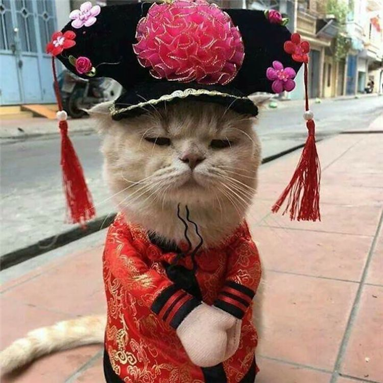 Cats in Funny Clothes