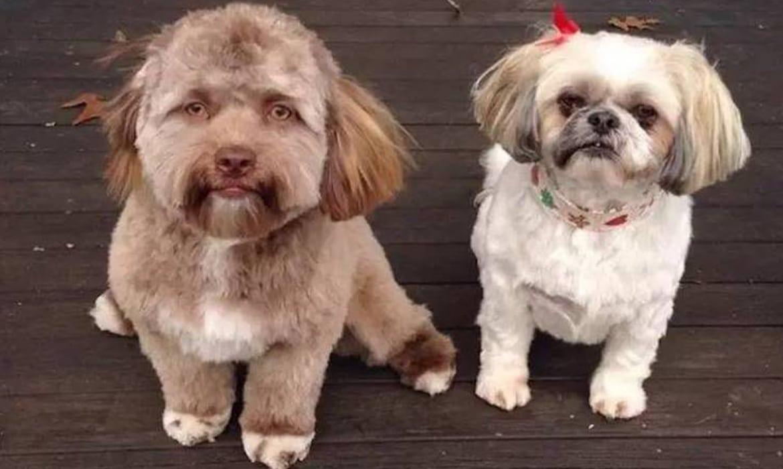 Human Face Dog For Adoption