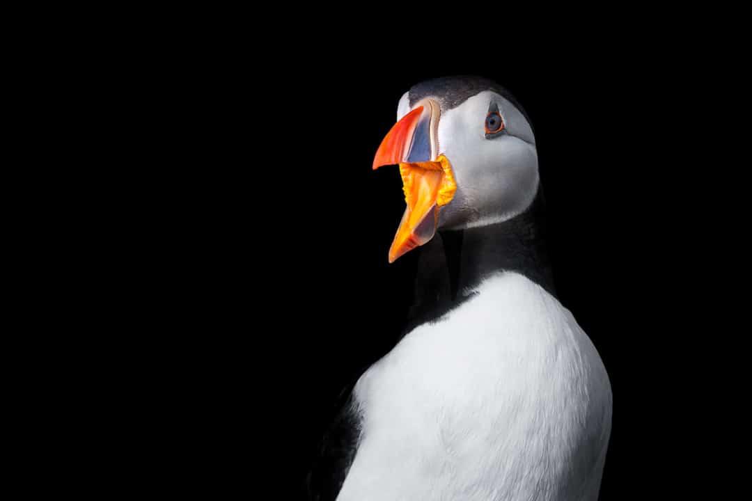 George Wheelhouse Animal Portraits British Wildlife Photography