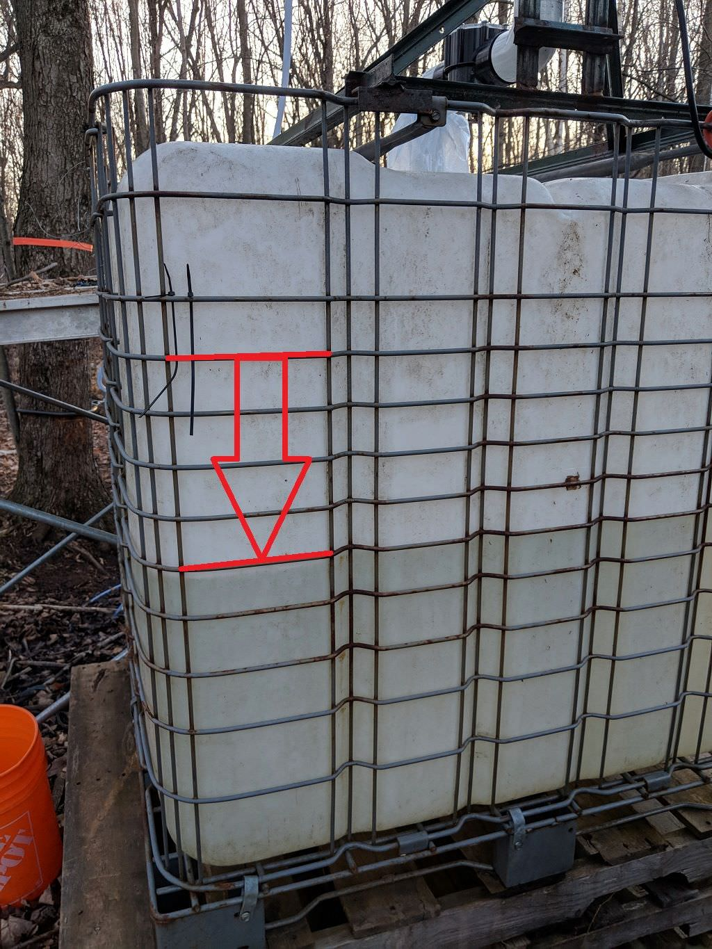 Tapping Maple Trees DIY