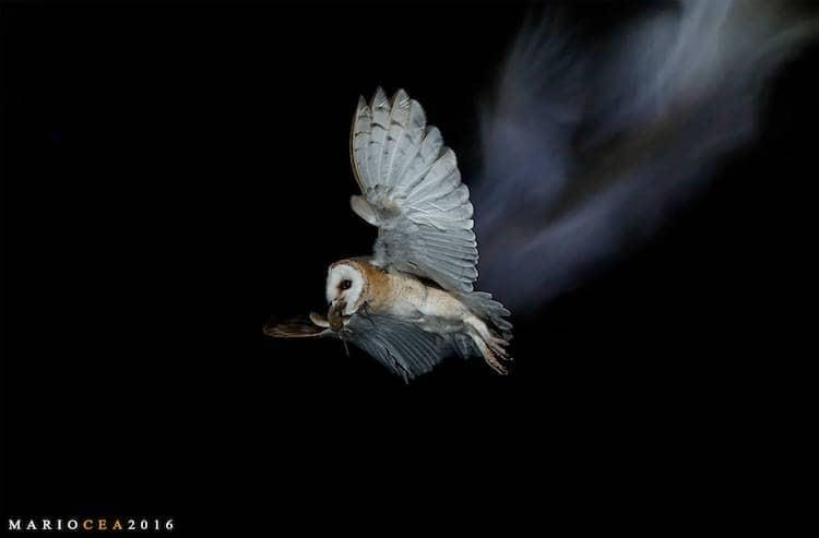 fotógrafo de aves Mario Cea