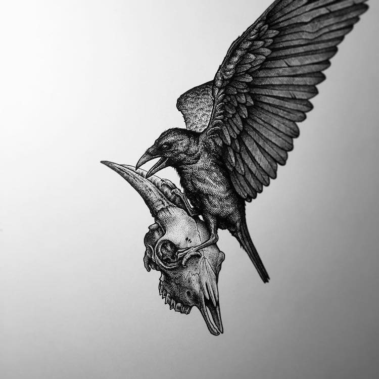Paul Jackson animal drawings