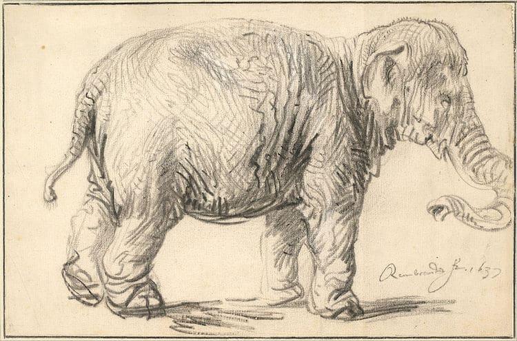 Rembrandt elefante