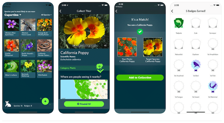 Seek App by iNaturalist