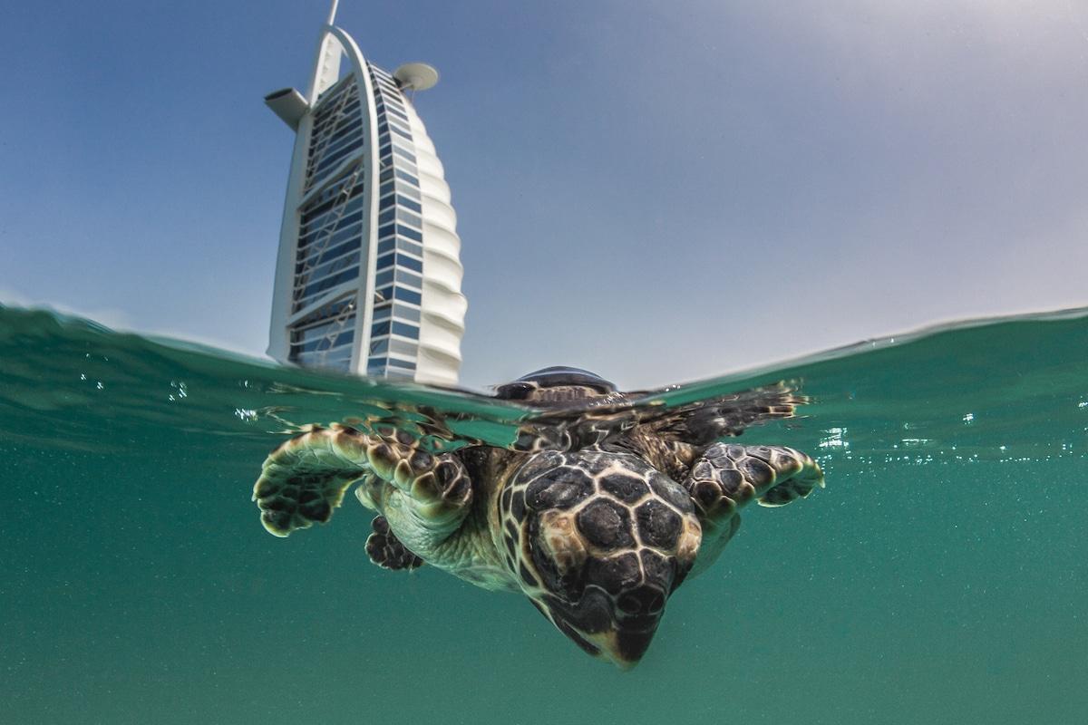 Simone Caprodossi Underwater Photography