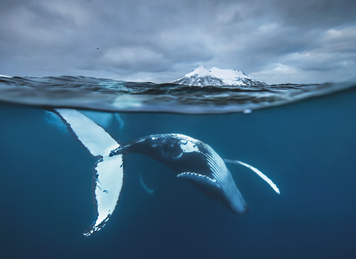 Underwater Photography by Audun Rikardsen