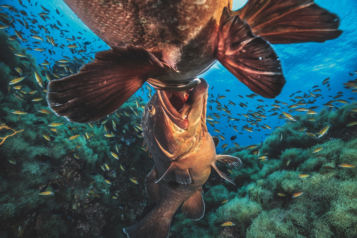 Wildlife Photographer of the Year Book About Underwater Photography