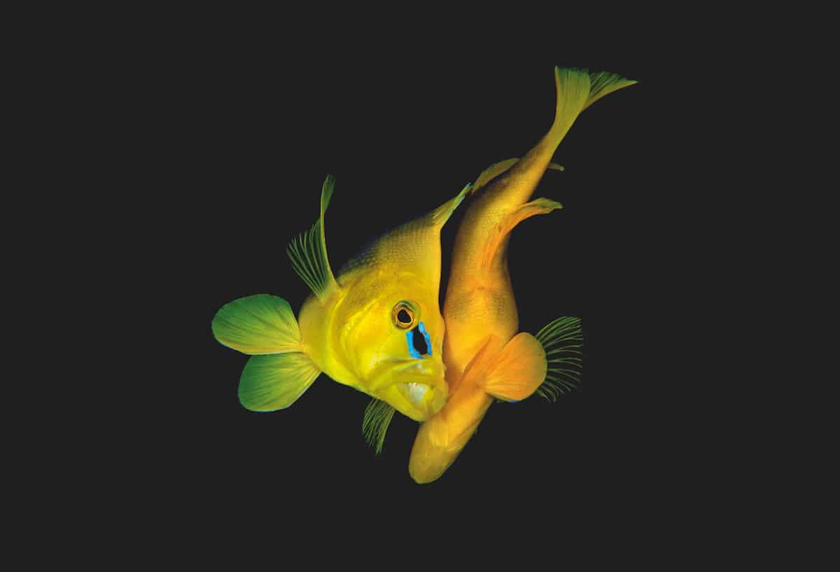 Alexander Mustard Underwater Photographer