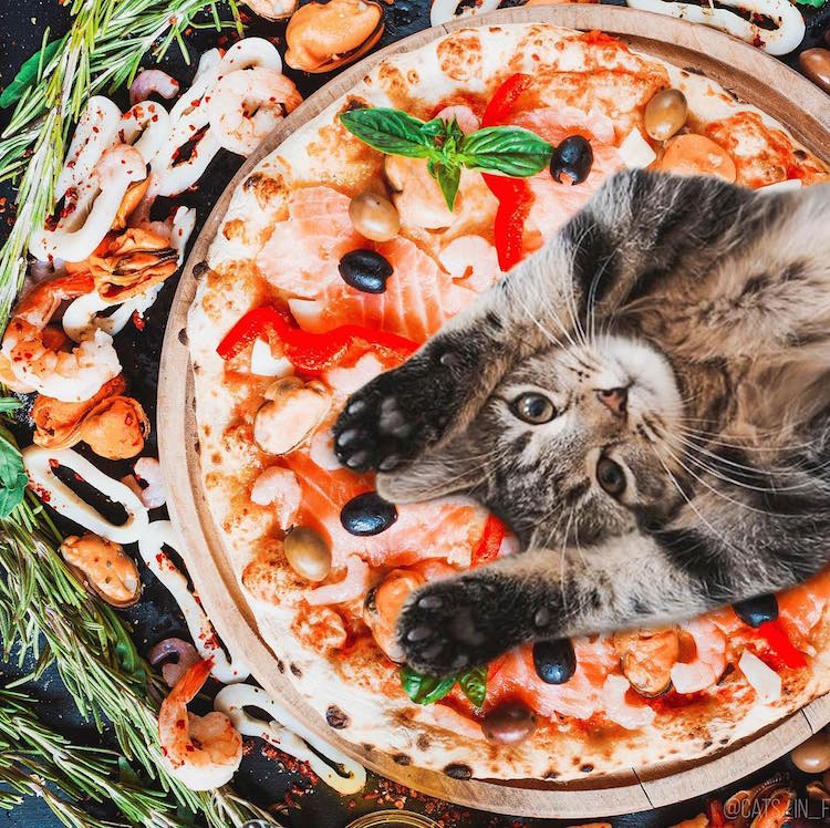 Funny Cat Photos Cats in Food by Ksenia