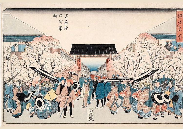 Cherry Blossom Meaning Cherry Blossom Symbolism Cherry Blossom Festival Hanami