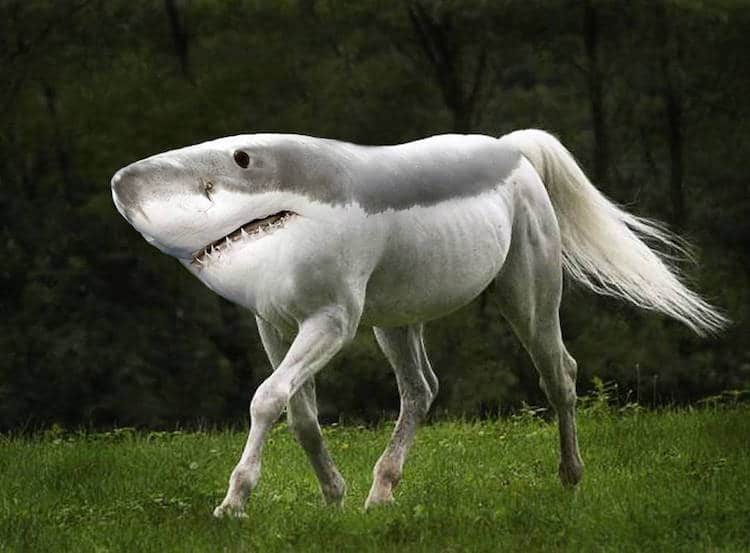 Weird Animals Mixed Together 9