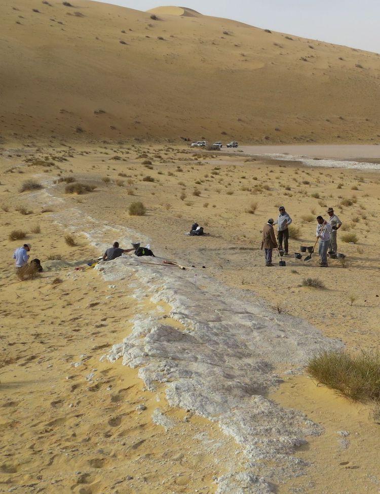 Excavations at the Al Wusta site