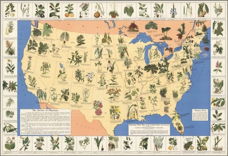 Medicinal Plant Map of the United States Shows Medicinal Plants By State