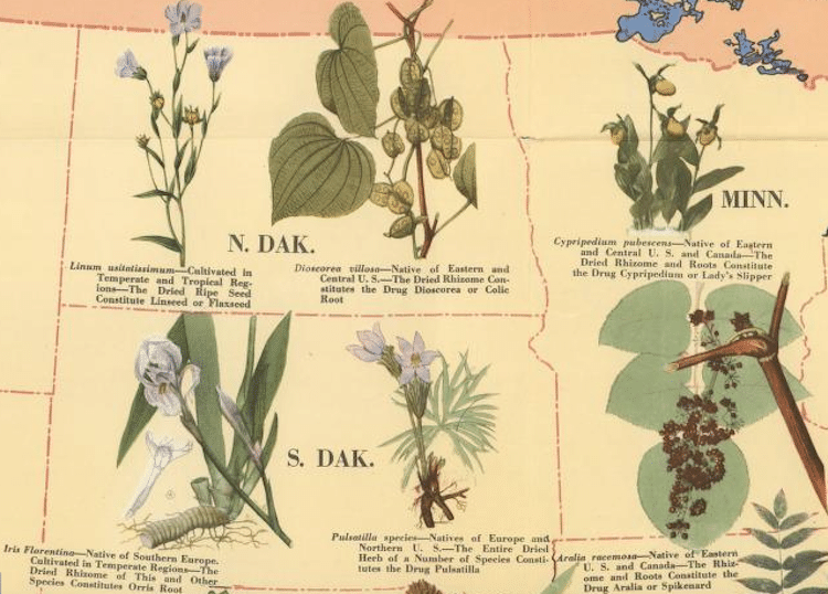 Medicinal Plant Map of the United States Medicinal Plants