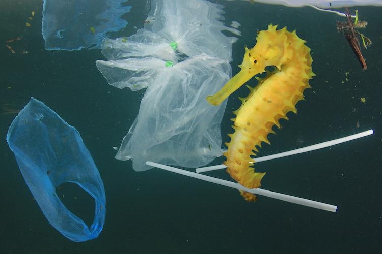 UK Single Use Plastic Ban