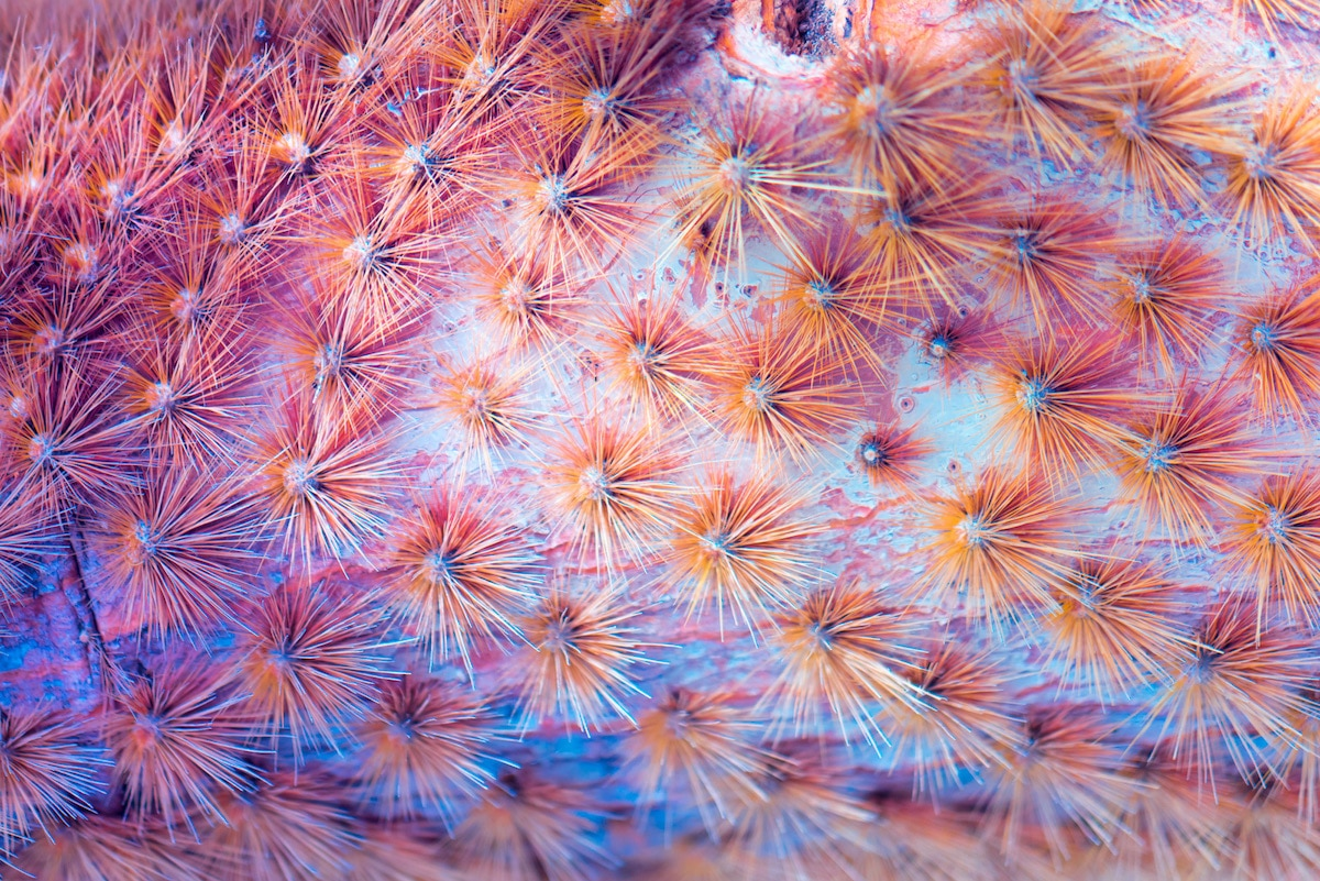 Full Spectrum Photography