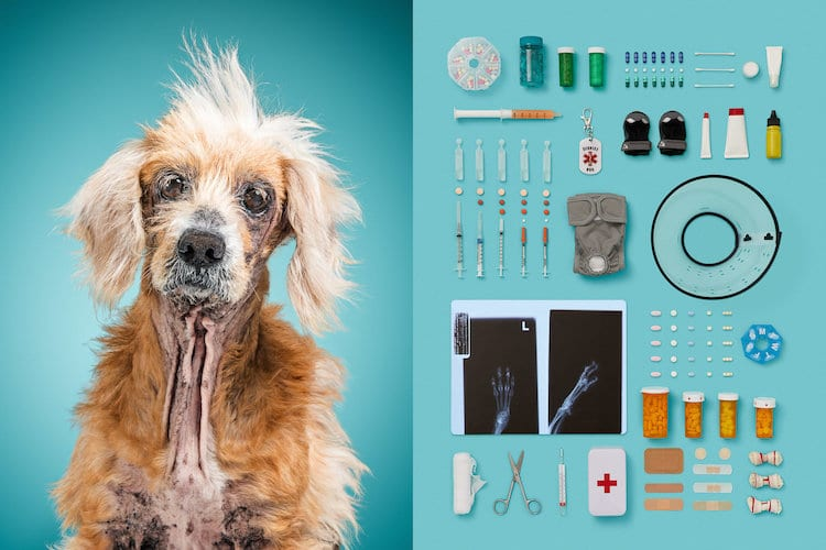 A Dog's Life Dog Portraits by Alicia Rius