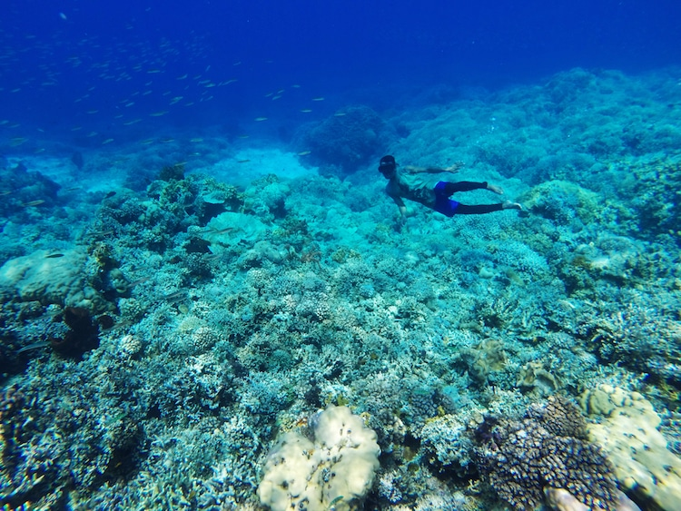 Bajau Freediving Genetics