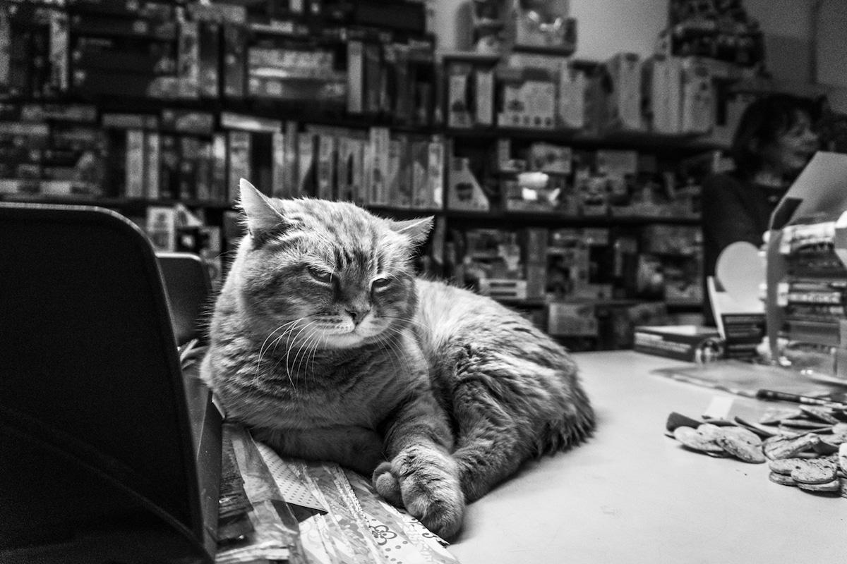 Cat Photography by Marianna Zampieri