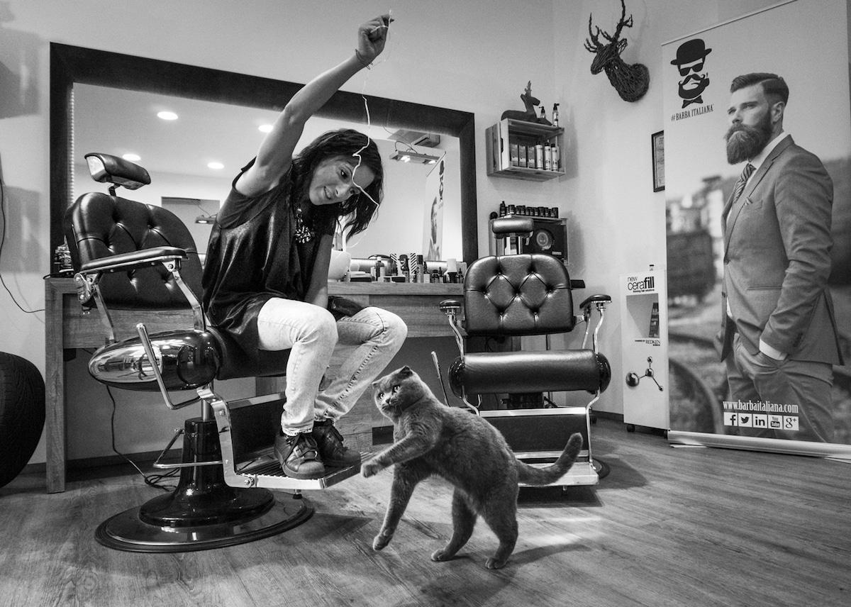 Cats at Work Cat Photography Marianna Zampieri