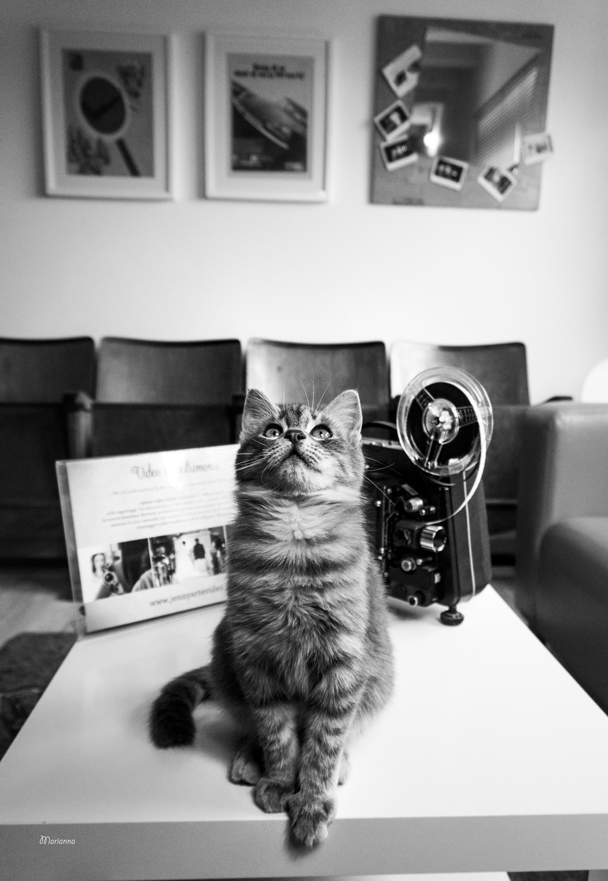 Cats at Work Cat Photography Marianna Zampieri