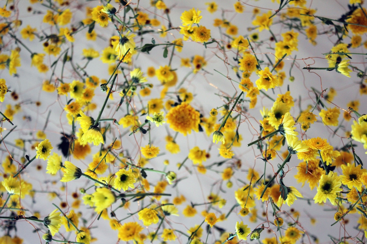 Installation Art Features Thousands Of Flowers Suspended In Galleries