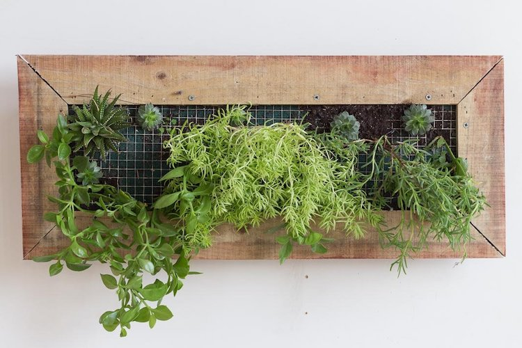 how to make a hanging wall garden