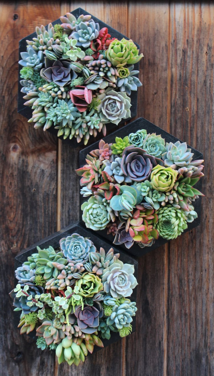Hanging Succulents Make A Vertical Garden Easier Than Ever To Achieve