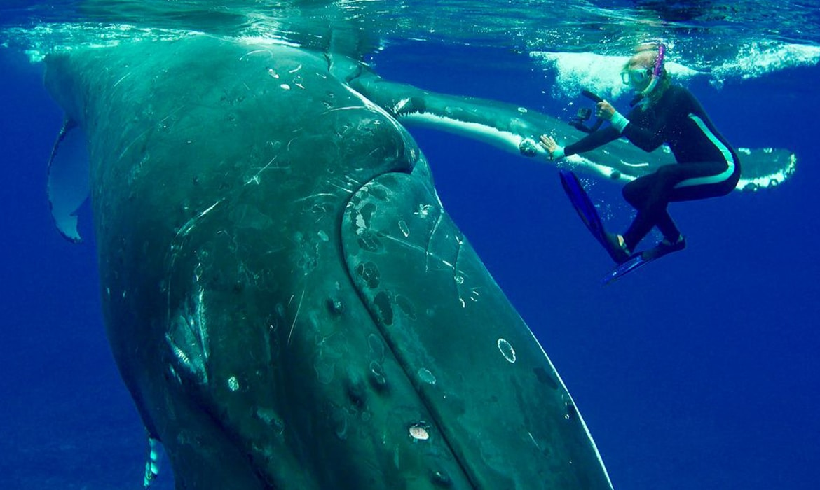 The chandelier that produces a shadow forest of wild trees 50000 pound humpback whale protects diver from lurking tiger shark arubaitofo Images