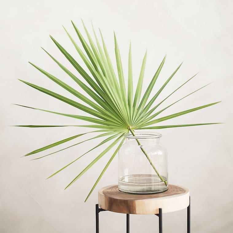 Order Plants Online