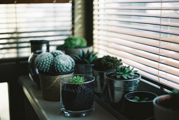 Online Plant Shops