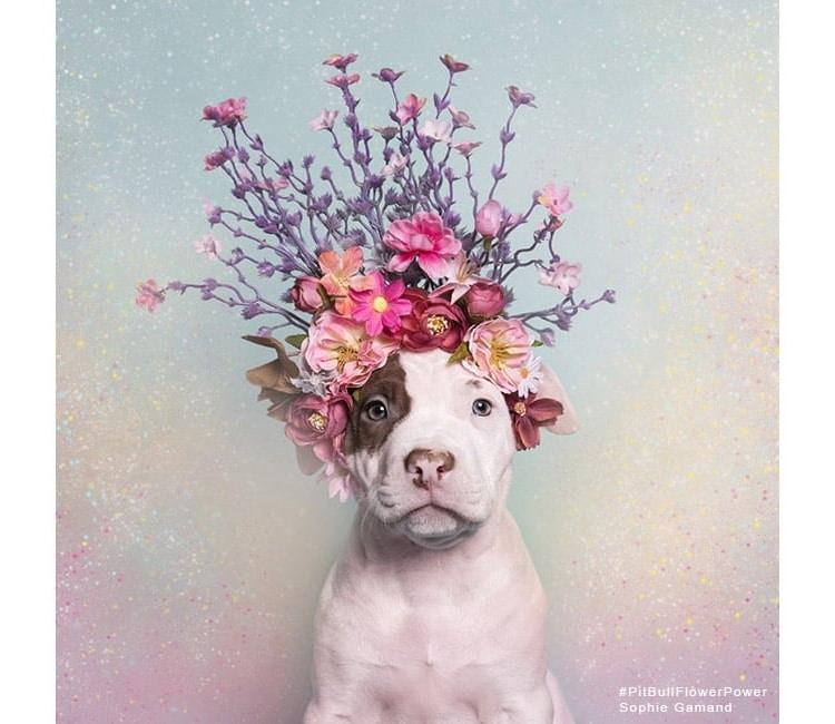 Sophie Gamand Flower Power