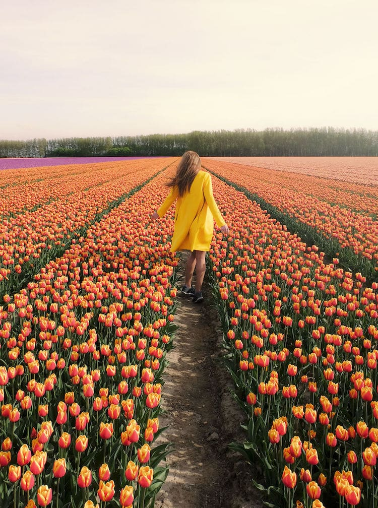 Tulip Season Netherlands by How Far From Home